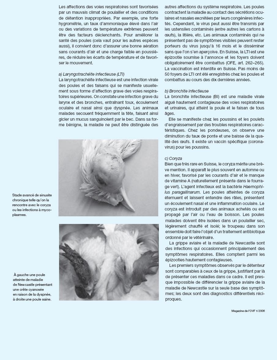 Les maladies et parasites for Les maladies des poules