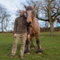 Jardins et chevaux