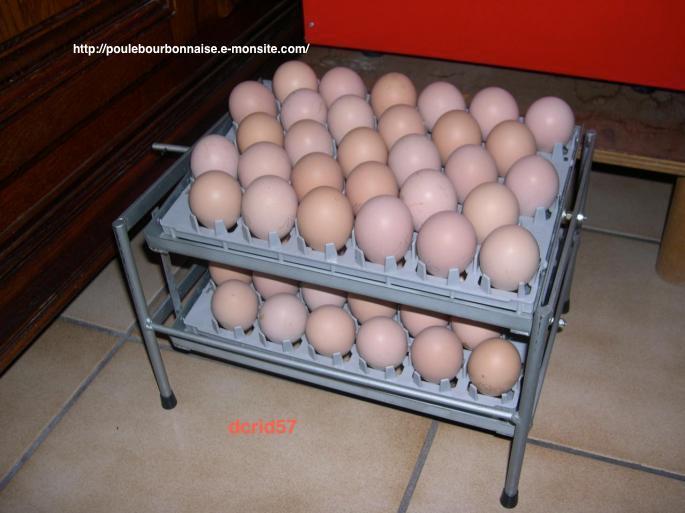 Oeufs de poules bourbonnaises destinés à être placés en couveuse