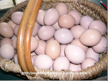Les oeufs for Oeuf de poule conservation