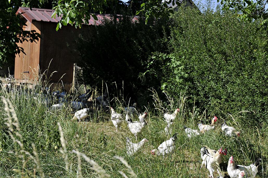 volailles-bourbonnaises-en-production-fermiere-3.jpg