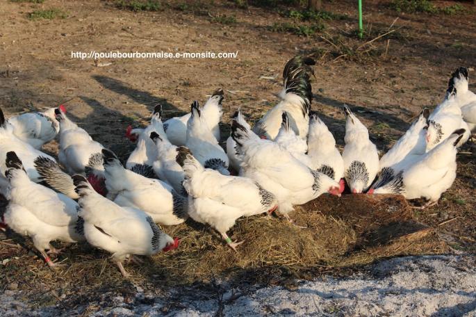 Volailles bourbonnaises